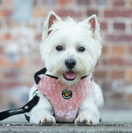 Fluffy Flossy Textured Dog Harness