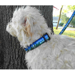 A.T. Dog Collar - ON SALE!!