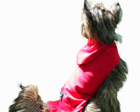 Soft Cotton Dog Sweater with Hood