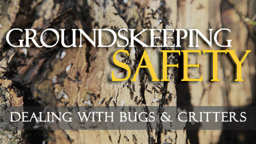 Groundskeeping Safety: Dealing With Bugs and Critters