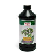 MDM Liquid Chlorophyll Mint 16 OZ