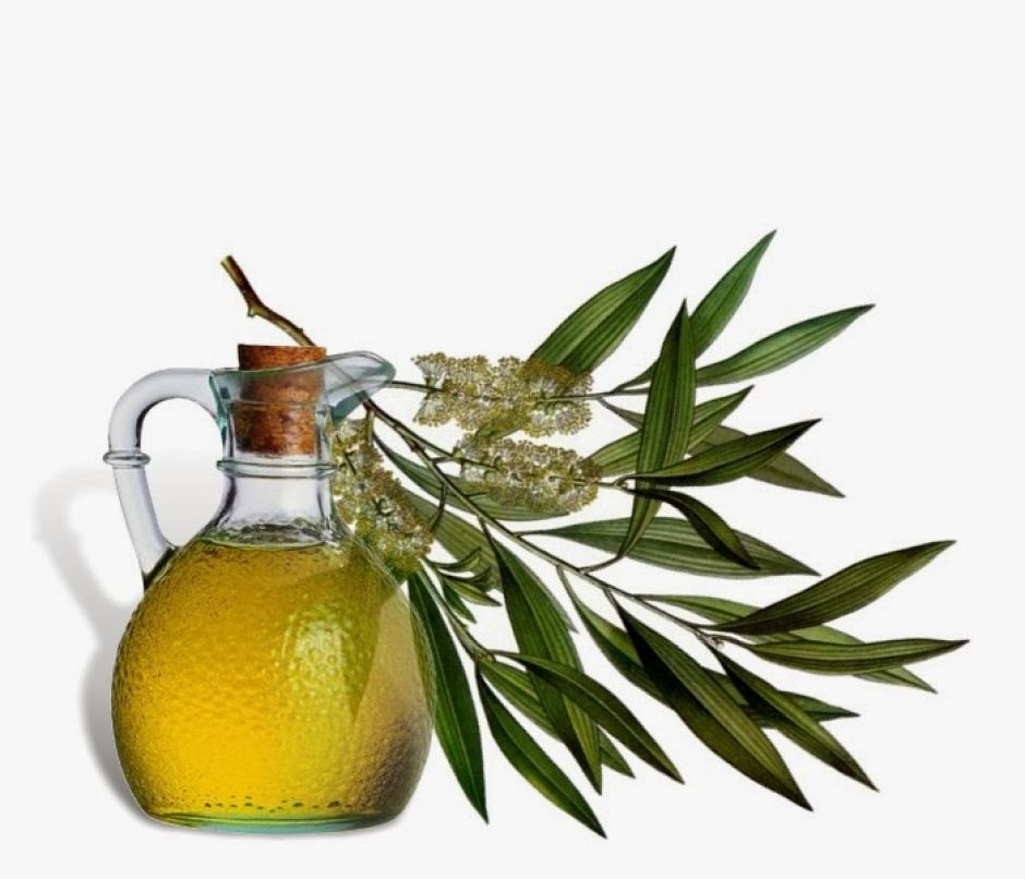 A bottle of oil and a branch of tea tree