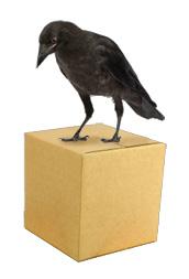 directory-raven.jpg