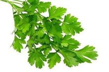 Fresh flat leaf parsley