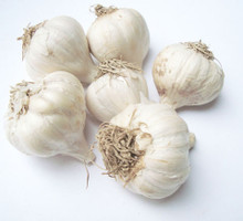 Fresh local German White garlic