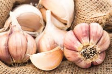 Mild French garlic