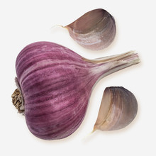 Russian Red garlic