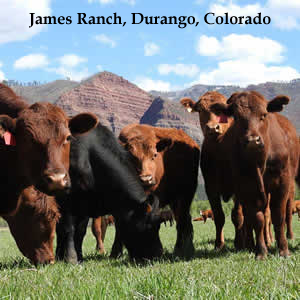 James Ranch, Grass-fed Beef, Durango, Colorado