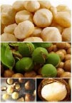 ingredients-macadamia.jpg