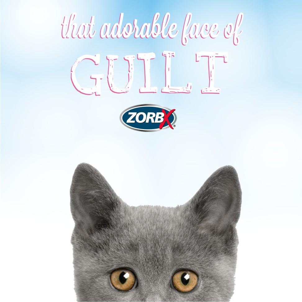cat-urine-odors.jpg