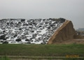 Silage Sheeting 132 ft x 250, 500 6mil