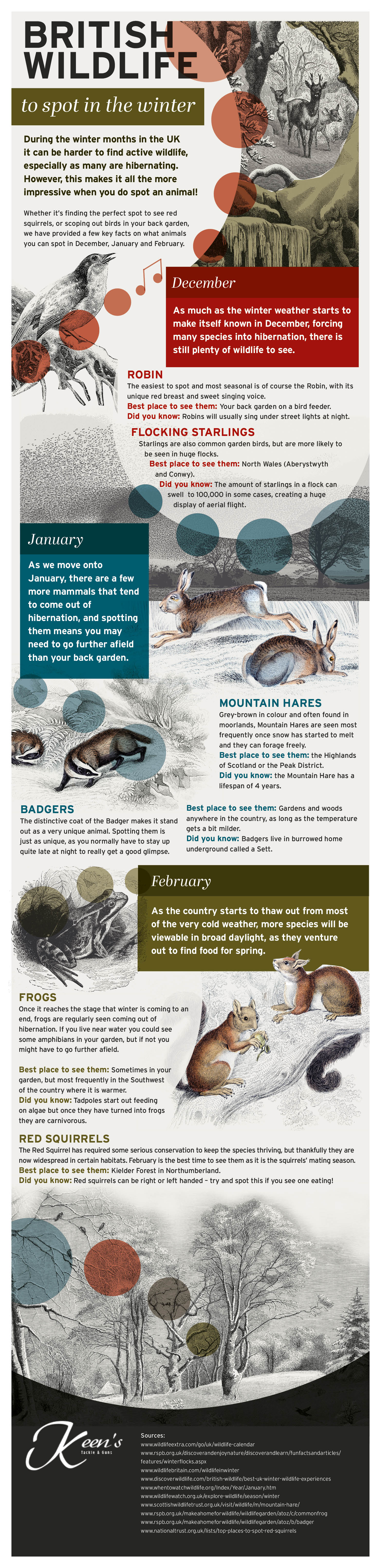 British Wildlife to Spot in the Winter Infographic