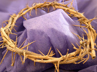 Crown Of Thorns (7-8 inches in diameter).