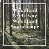 Woodland Bridalway Woodland Soundscape Meditation Download MP3