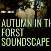 Autumn In The Forest Soundscape Meditation Download MP3