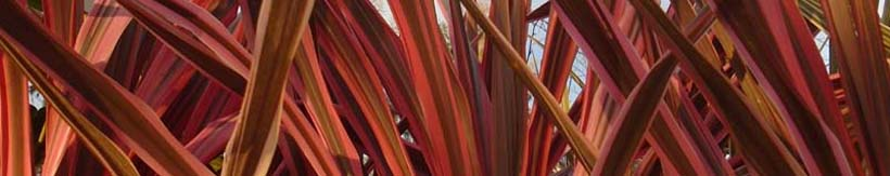 banner-cordylines-and-phormiums.jpg