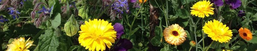 banner-flower-seeds.jpg