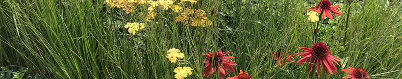 banner-grasses.jpg