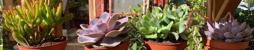 banner-house-plants2.jpg
