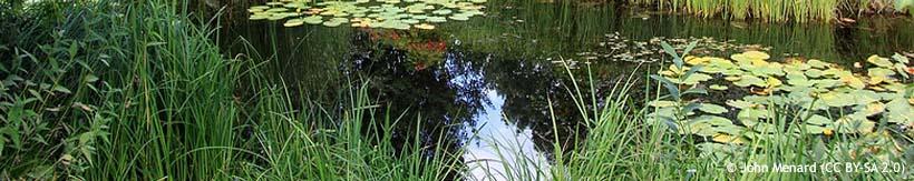 banner-marginal-plants.jpg