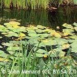 banner-marginal-plants.jpgsq.jpg