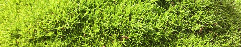 banner-moss.jpg