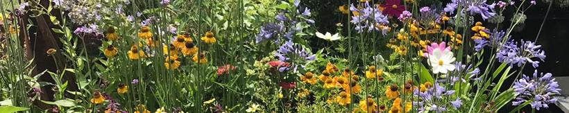 banner-perennials.jpg