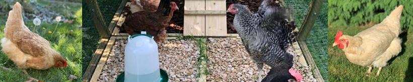 banner-poultry.jpg