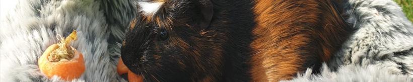 banner-small-animals.jpg