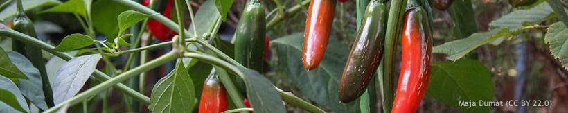 banner-veg-salad-seeds.jpg