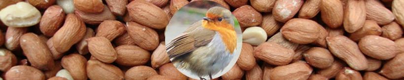 bird-seed-banner.jpg