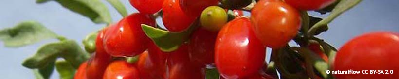 category-banner-goji-berry-naturalflow-cc-by-sa-2.0.jpg