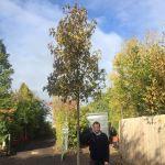 category-image-mature-trees-2-.jpg