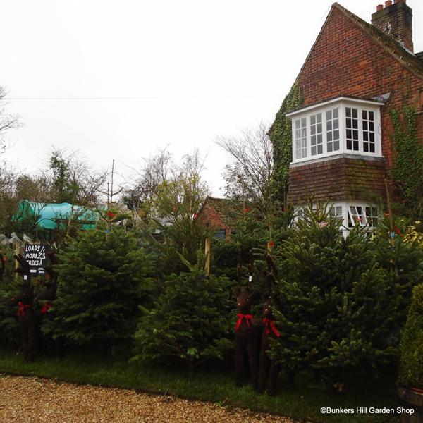 christmas-trees-2015.jpg