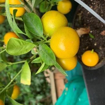 citrus-2.jpg