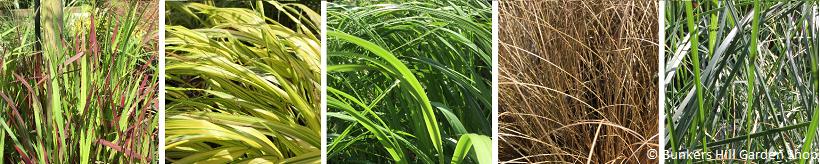 grass-banner.png