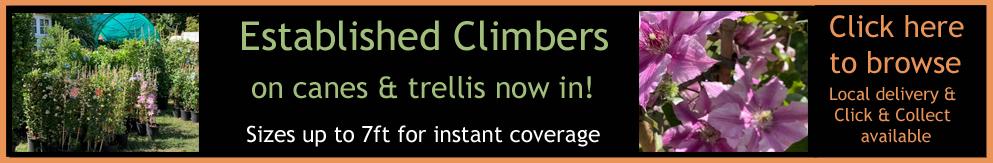 instant-climber-banner2.jpg