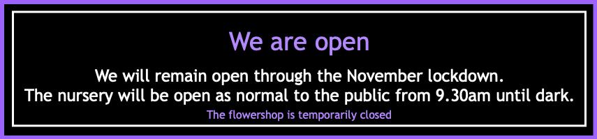 lockdown-open-4.png