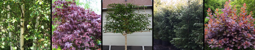 mature-trees-and-specimen-plants-banner2.jpg