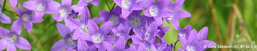 perennials-campanula-banner.jpg