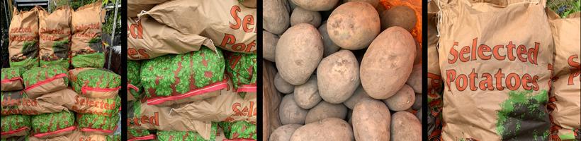 potato-banner-long2.jpg