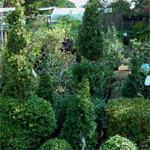 product-categories-box-topiary.jpg