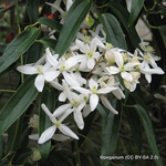 product-categories-evergreen-climbers.jpg