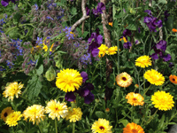 product-categories-flower-seeds.jpg