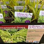 product-categories-grasses-1ltr.jpg