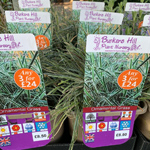 product-categories-grasses-3ltr.jpg