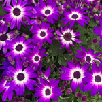 product-categories-senetti.jpg
