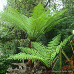 product-categories-tree-ferns.jpg