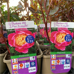 product-category-peonies-3ltr.jpg