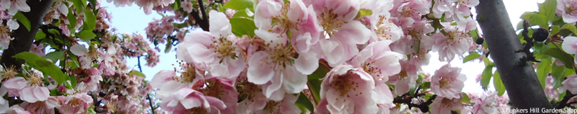 prunus-ornamental-tree-banner.jpg